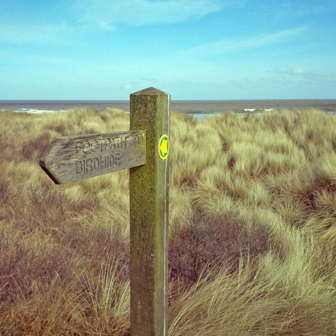 A walk through the dunes to the hide.