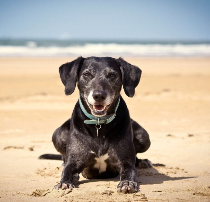 Dog-friendly beaches in Lincolnshire