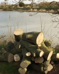 seaside-lodge-anderby-creek-logs-1